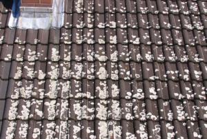 Funktionsprüfung der Dachfläche