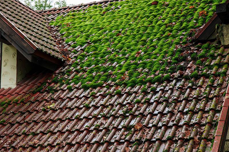 Bemoostes Dach vor der Dachreinigung
